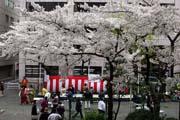 2009年の桜 6