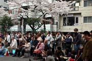 2009年の桜 7