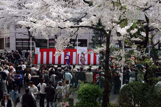 2009年の桜 8