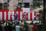 2009年の桜 9
