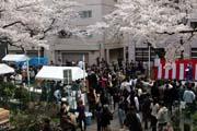 2009年の桜 10