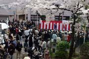 2009年の桜 11