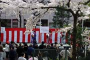 2009年の桜 14