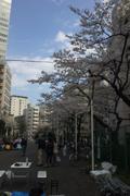 2010年の桜 2