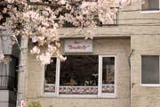 2010年の桜 4